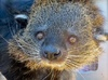 Up to 35% Off Feed-N-Greet A Bearcat Tour at Wild Wonders
