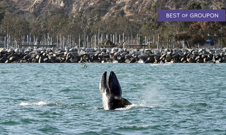 Whale-Watching Cruise from Dana Wharf Whale Watching (Up to 60% Off). Four Options Available.
