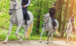 Associazione Sportiva Ippica Dilettantistica Gondrano e Berta: 7 o 10 lezioni di equitazione da Associazione Sportiva Ippica Dilettantistica Gondrano e Berta (sconto fino a 70%)