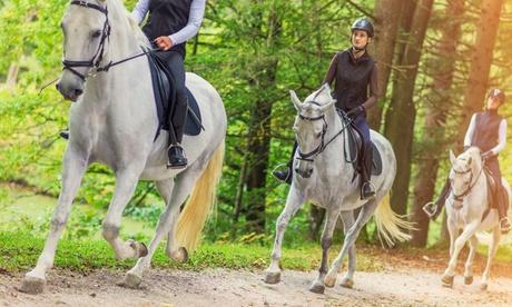 Paseo a caballo para 2 o 4 personas o en pony para 1 o 2 niños desde 4,99 € en Can Vivet Oferta en Groupon