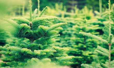 Eden Christmas Trees