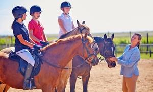 Poney Club du Voulgis: 30 ou 60 minutes de parcours ludique dans le Pony Parc dès 10 € au Poney Club du Voulgis