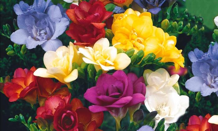 Pack 19 plantes vivaces fleuries roses et blanches groupon for Plantes fleuries vivaces