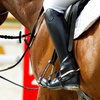 Up to 59% Off Private Horseback Riding Lessons