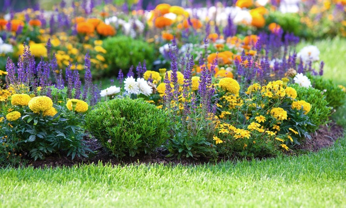 A Chat With Slyte Lawn Care Services