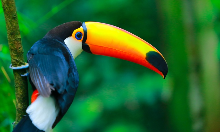 7-Day Amazon Eco-Adventure with Airfare from Pacific Holidays