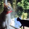 全国29店舗/猫カフェ60分(フリードリンク・写真撮影自由・無料Wi-Fi)