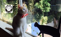 【38%OFF】かわいい猫たちと遊んで、癒やされよう≪猫カフェ60分(フリードリンク・写真撮影自由・無料Wi-Fi)/1名分・2名分・3...