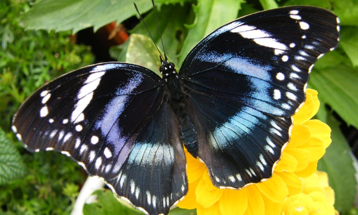Newport Butterfly Farm - Tiverton: Visit for Up to 2, 4, or 15 People to The Butterfly Zoo (Up to 67% Off)