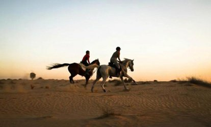 Desert Horse Riding Experience at AL Dhabi Horses & Camels Rental