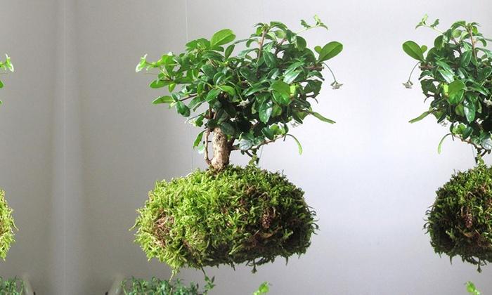 bonsa s flottants groupon. Black Bedroom Furniture Sets. Home Design Ideas