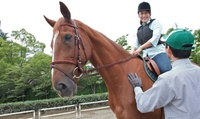 【最大64%OFF】可愛い馬とふれあう時間を、全身で楽しもう≪手ぶらでOK・屋内練習場完備・はじめての乗馬体験(レンタル・保険費用込)/...