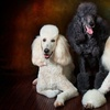 Up to 83% Off Photo Shoot at Hatton Pet Portrait Studio