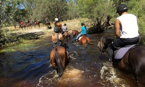 1800 Trail Rides: From $49 for a 90- or 120-Minute Scenic Horse Ride for One or Two People with 1800 Trail Rides (From $89 Value)