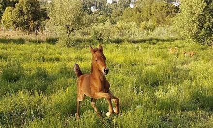 Entrada a la granja escuela para 2, 4, 6 u 8 personas desde 15 € en Club Natural Equus