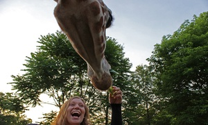 Elmwood Park Zoo: Zoo Admission for One or Two & entry to the Beast of Feast Event on June 9th at Elmwood Park Zoo (Up to 25% Off)
