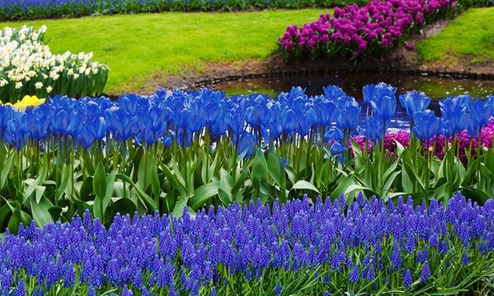 Blue Flower Bulb Garden Collection (40 Pack): Blue Flower Bulb Garden  Collection ...