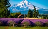 Up to 18% Off Lavender Picking at Lavender Valley