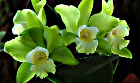 Flowers from Pelican Coast Farms (Up to 47% Off) ab3fb9e0-507e-4601-a529-8fd3e0b1f8a1