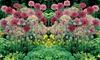 Mixed Allium Bumper Bulb Pack - 100 or 200 Bulbs