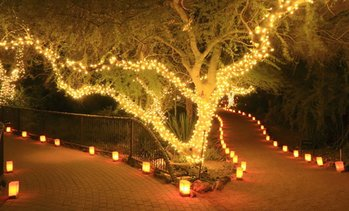 Up to Four Strings of 50-, 100- or 200-LED Solar-Powered Fairy Lights