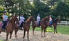 Up to 31% Off Horseback-Riding Lessons at Rocking Horse Farm