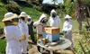 Honeybee Hive Tour with a Local Beekeeping Expert - National City: Walk Through a Honeybee Hive with a Local Beekeeping Expert