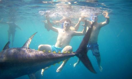 Tour en catamarán, snorkel entre atunes y degustación de atún rojo con bebida para 2 desde 39,90 € en Tuna Tour