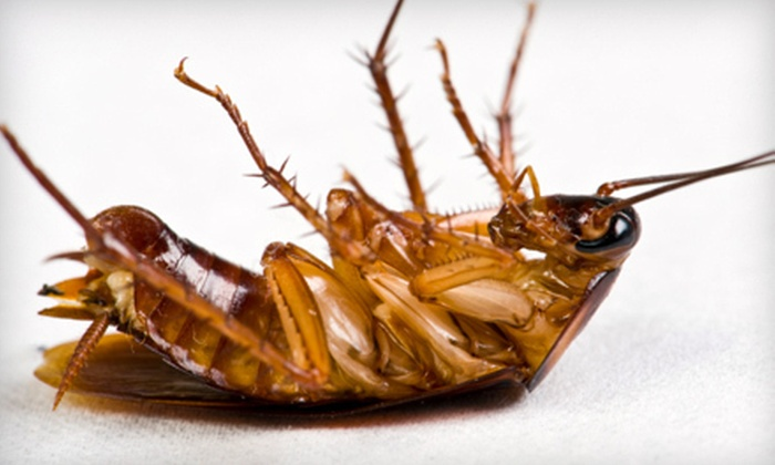 On The Spot Pest Control - South Plainfield: Interior and Exterior Pest Treatment with Ant Inspection or $59 for $125 Worth of Services from On The Spot Pest Control