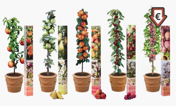 5 ou 10 arbres fruitiers, 90-100 cm