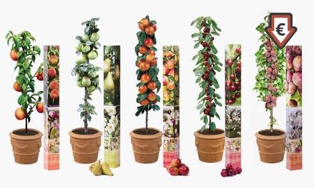 5 ou 10 arbres fruitiers, 90 100 cm