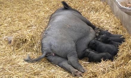 2 o 4 entradas al Zoo Koki con bolsa de comida para los animales (hasta 52% de descuento)