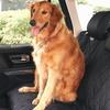 Lightweight Pet Seat Protector