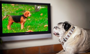 $0 for One Month Digital Subscription to DOGTV