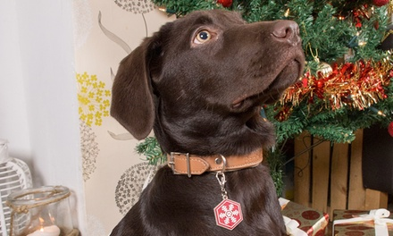 Festive Collection Pet Collar Snowflake Charmfrom £3.49