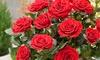 Lots de roses en pots