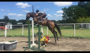 Winning Fields Stables: $20 for $65 Worth of Services — Winning Fields Stables