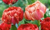 10 Peony Flowered Tulips