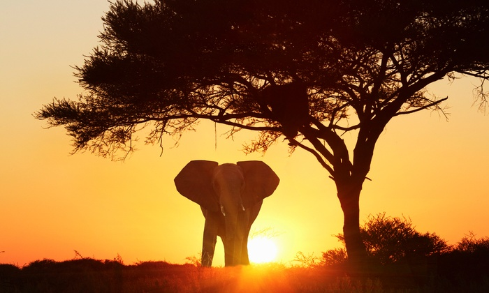 South Africa Tour And Safari With Hotels And Air From Gate