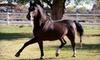 Roy-El Morgan Farm - Las Dos: Two or Four Horseback-Riding Lessons at Roy-El Morgan Farm in Española (Up to 53% Off)