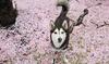 Fuzzy Friends Animal Care - East Arlington: Six 30-Minute Dog Walks or Five 1-Hour Dog Walks from Fuzzy Friends Animal Care (Up to 50% Off)
