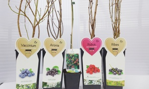 die pflanzenquelle: Wertgutschein über 64 € anrechenbar auf ein Paket Obstbäume aus 5 verschiedenen Sorten bei die pflanzenquelle