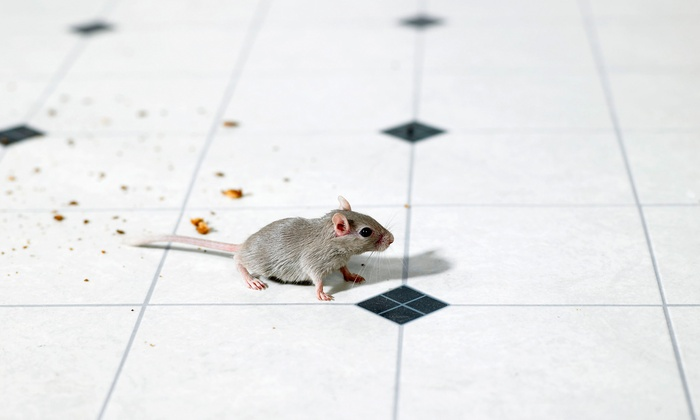 Green Environmental Group - Inland Empire: $79 for a Whole-House Rats and Rodents Inspection from Green Environmental Group ($189 Value)