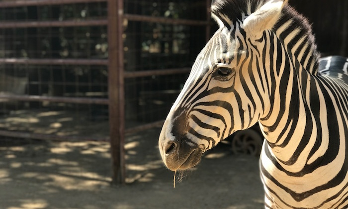 Rancho Las Lomas Wildlife Foundation Tour