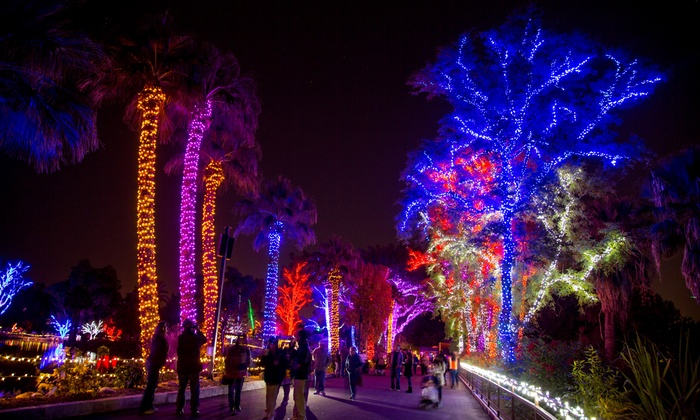 Exceptional ZooLights At The Phoenix Zoo Ideas