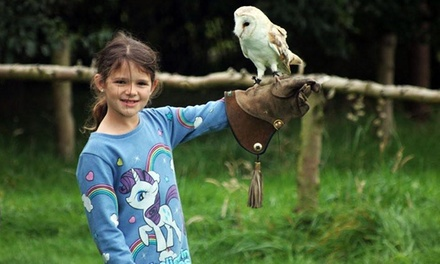 90-Minute Junior Falconry Session for One, Two or Four at Xtreme Falconry (79% Off)