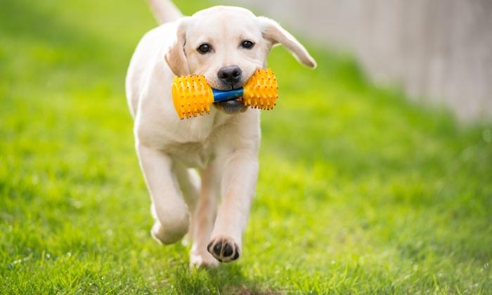 Manhattan Dog Spa - Upper East Side: Up to 56% Off Dog Daycare at Manhattan Dog Spa