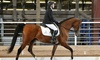 Up to 36% Off Horseback Riding Lessons at Magic Moments Stable