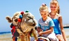 Houston Egyptian Festival - Discovery Green : Outing to Houston Egyptian Festival on October 29 (Up to 43% Off). Three Options Available.