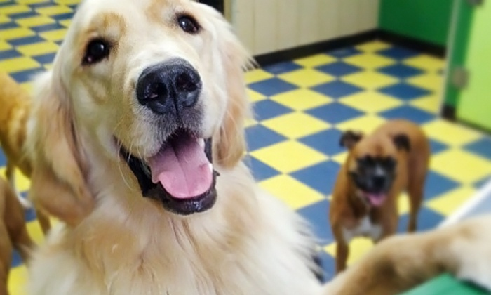 Dog School - Northern Liberties -  Fishtown: One or Five Days of Doggy Daycare at Dog School (Up to 50% Off)